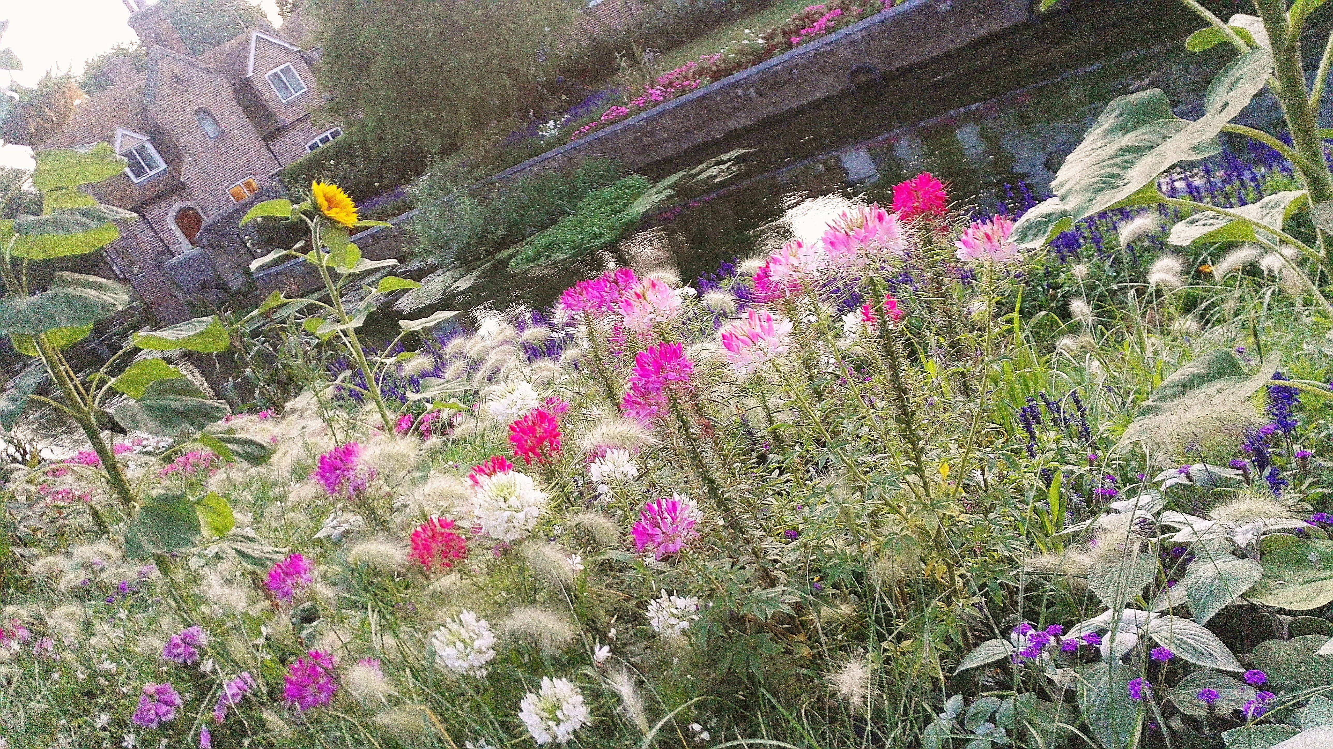 Kukkia joenrannassa